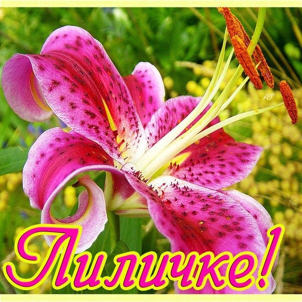 Музыкальное поздравление для лилии