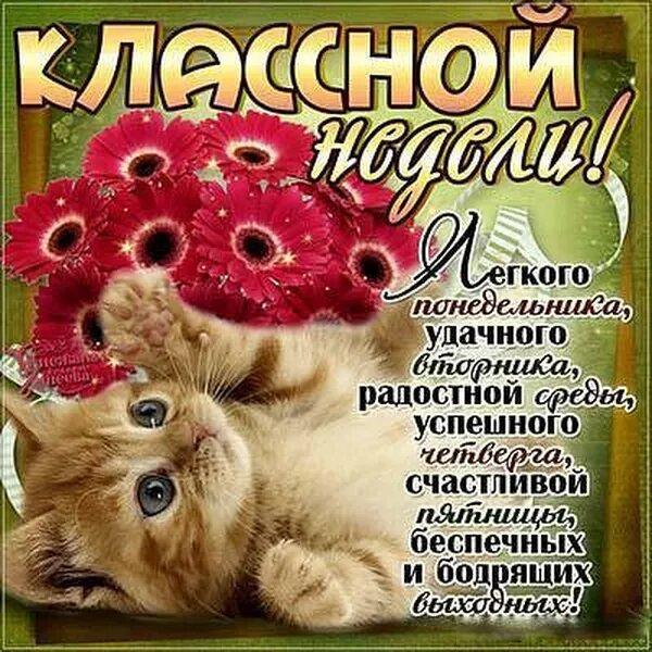 Картинка с надписью котеночек декоративное