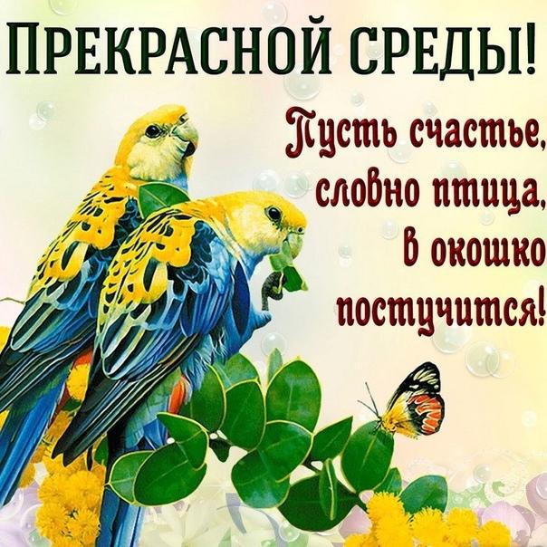 бронсон гифы со средой цветами чистого сердца желаю