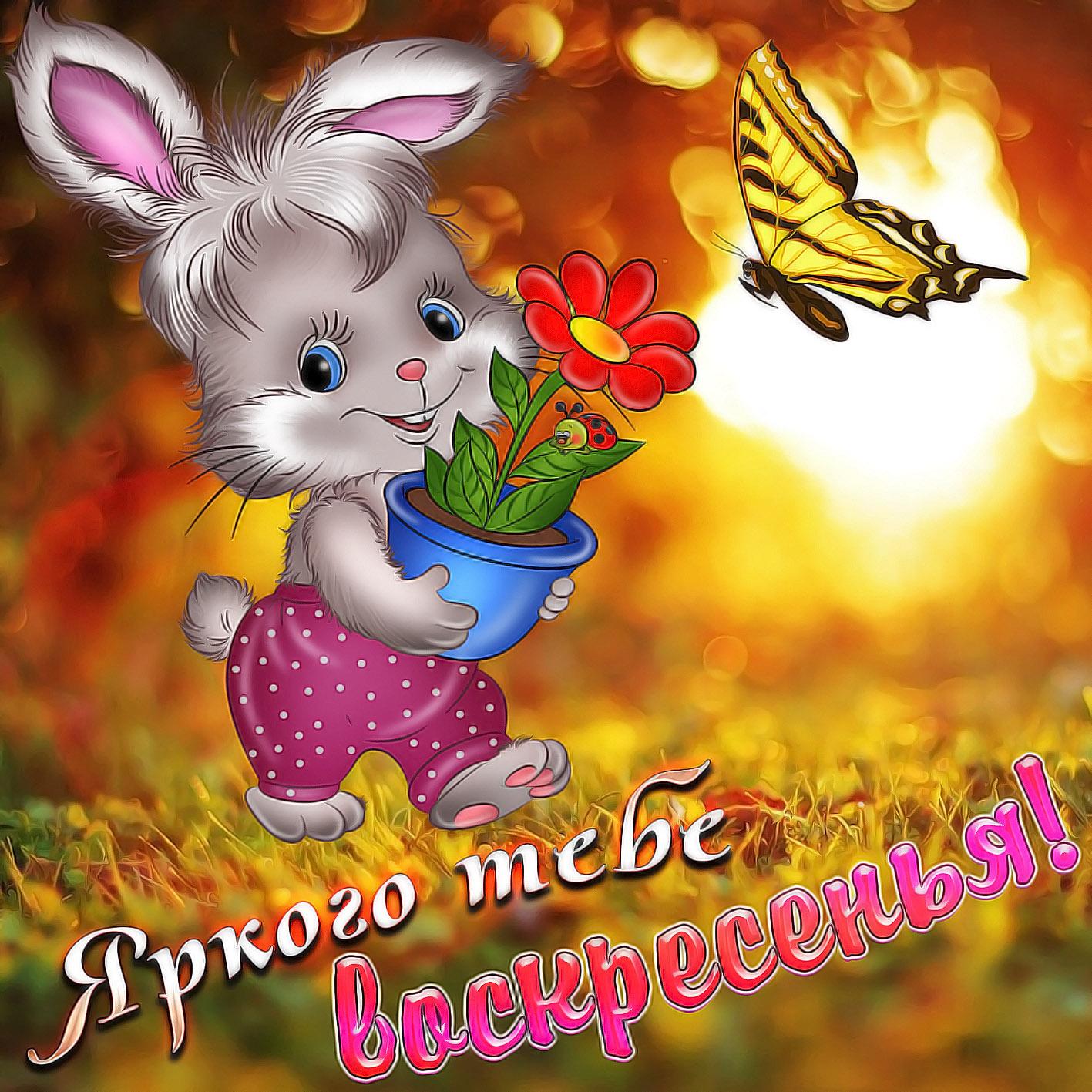 открытки с добрым воскресным утром позитив
