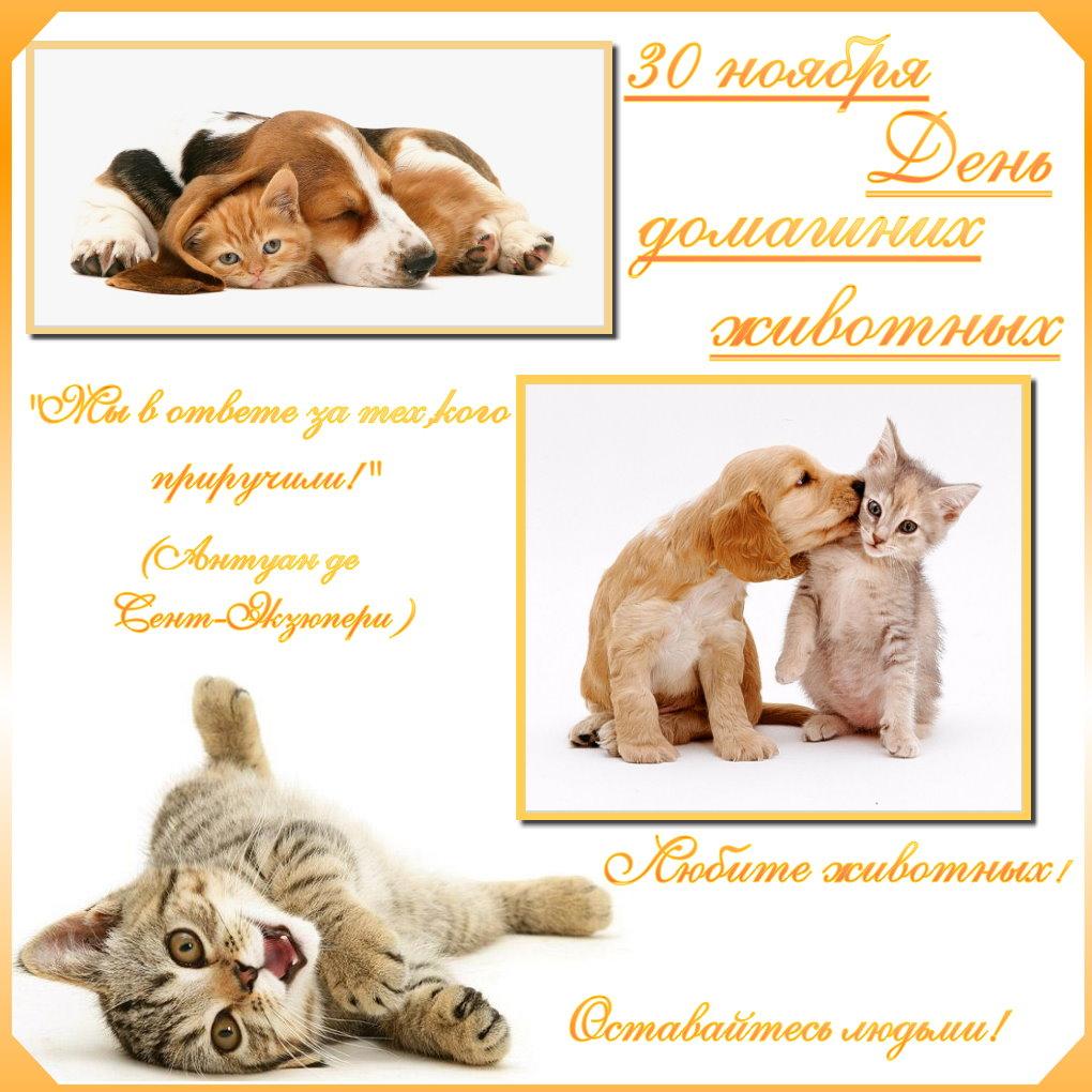 входе открытки день домашних животных ассортимент лобовых стекол