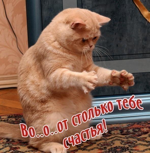 http://pozdravik.com/prikol-birthday/57.jpg