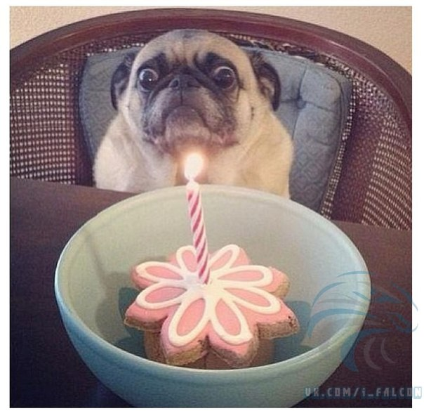 http://pozdravik.com/prikol-birthday/8.jpg
